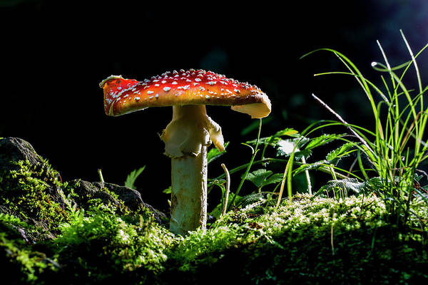 Wall Art - Photograph - The Magic Mushroom by Mircea Costina Photography