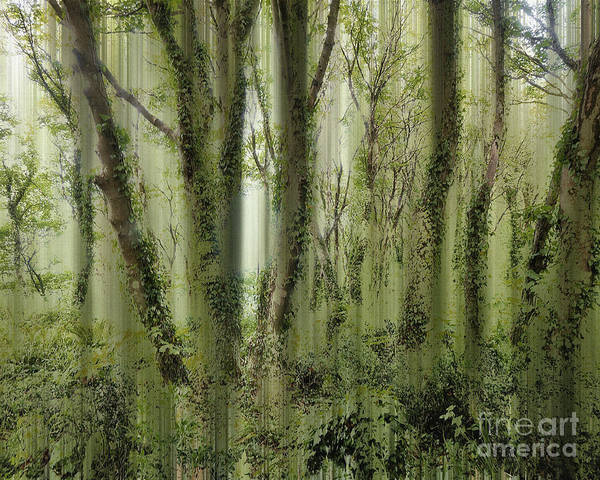 Digital Art - The Magic Of A Forest by Edmund Nagele
