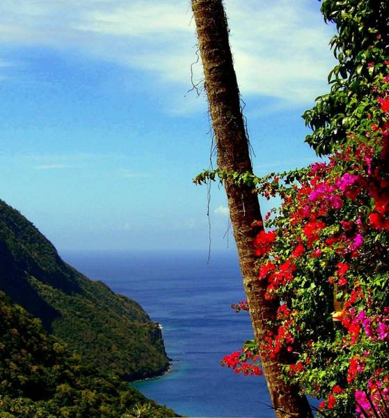 Wall Art - Photograph - The Magic Of St. Lucia by Karen Wiles