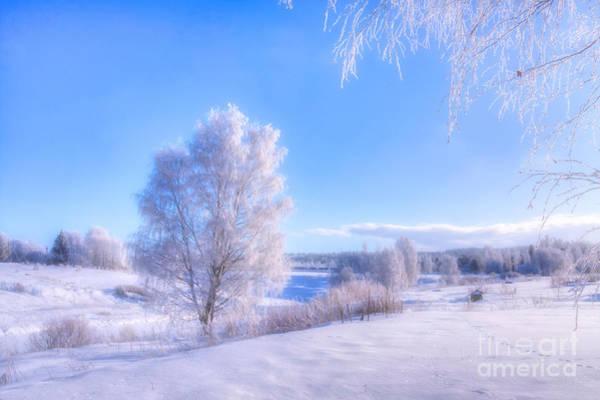Birch Photograph - The Magic Of Winter 3 by Veikko Suikkanen