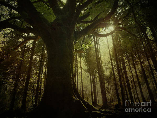 Photograph - The Magical Beech by Dominique Guillaume