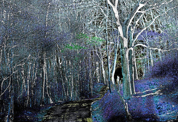 Photograph - The Magical Woods by Gerlinde Keating - Galleria GK Keating Associates Inc