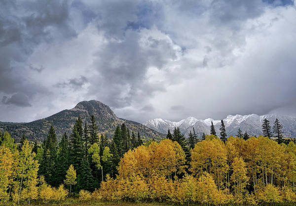 Photograph - The Magnificance Of Aspens by Leda Robertson