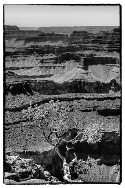 Photograph - The Magnificent Grand Canyon by David Patterson