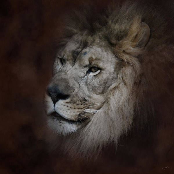Photograph - The Male Lion by Jai Johnson