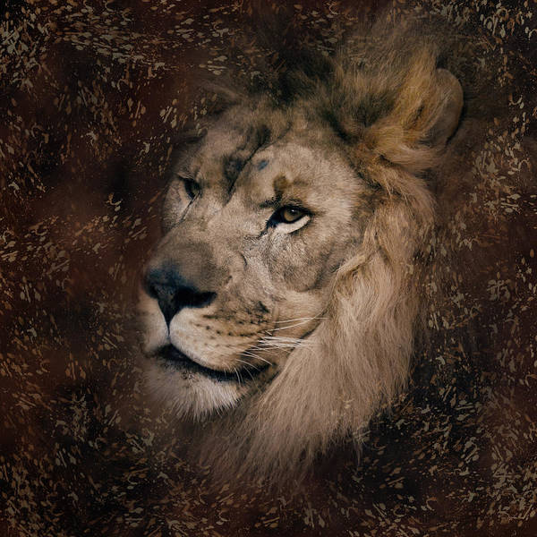 Photograph - The Male Lion With Texture Pattern by Jai Johnson
