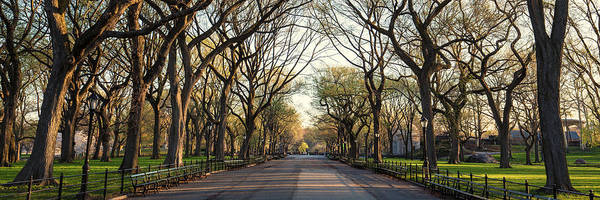 Photograph - The Mall In Central Park Nyc by Stefan Mazzola