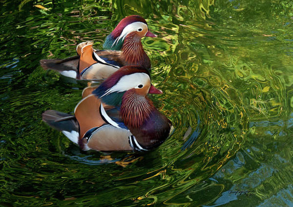Mandarin Duck Photograph - The Mandarin Brothers by Thanh Thuy Nguyen