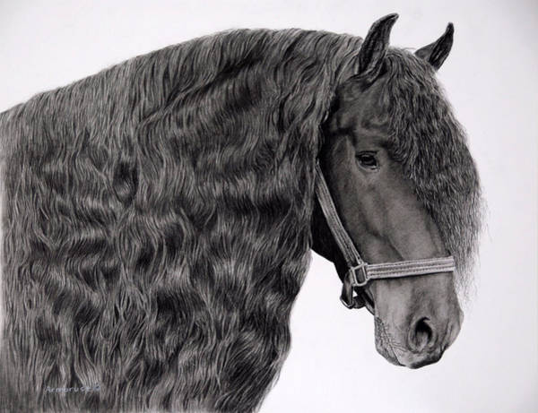 Friesian Drawing - The Mane Attraction by Carla Armbrust