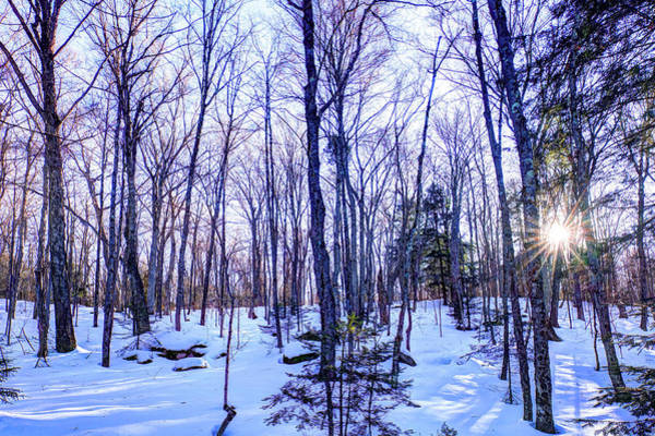 Photograph - The Many Colors Of Winter 2 by David Patterson