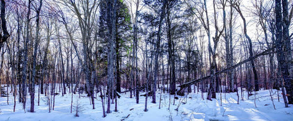 Photograph - The Many Colors Of Winter by David Patterson