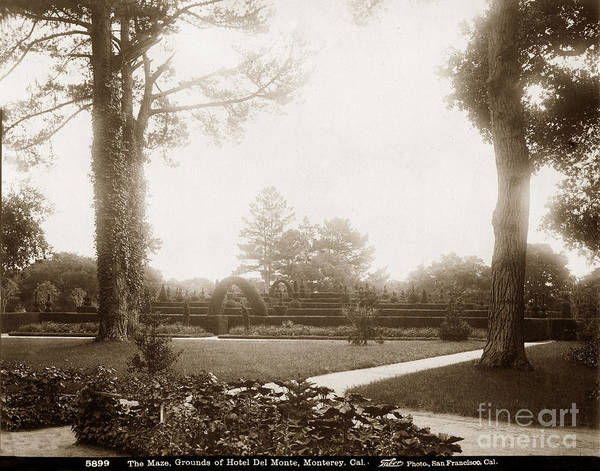 Photograph - The Maze, Grounds Of Hotel Del Monte Monterey Circa 1885 by California Views Archives Mr Pat Hathaway Archives