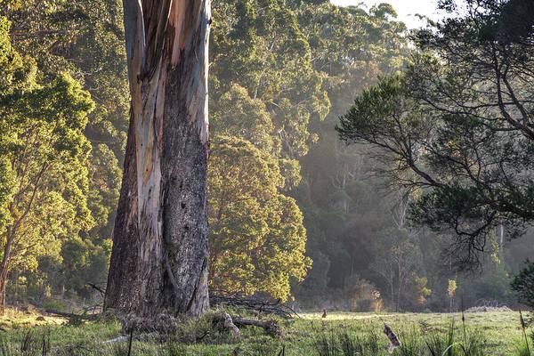 Photograph - The Meadow by Racheal Christian