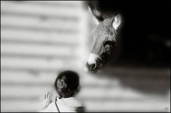 Photograph - The Meeting by Wayne King
