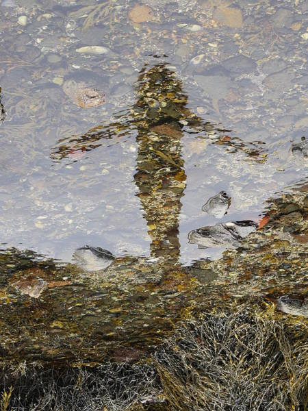 Photograph - The Mermaid by Richard Reeve