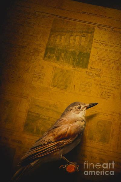 Wall Art - Photograph - The Messenger Bird by Jorgo Photography - Wall Art Gallery