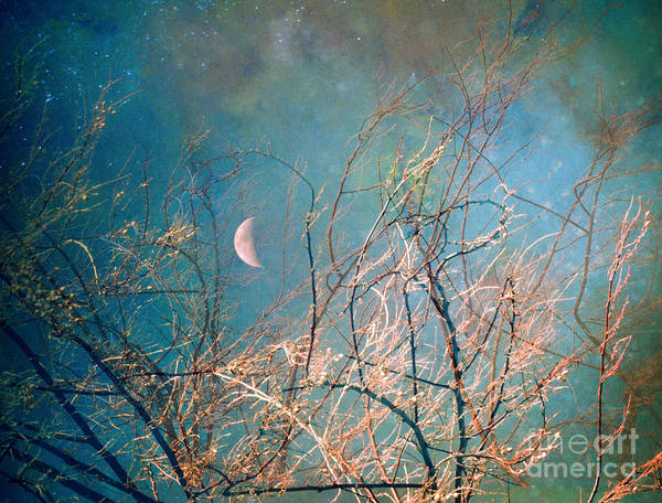 Photograph - The Messy House Of The Moon by Tara Turner