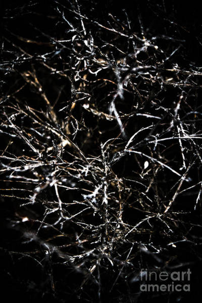 Dark Background Photograph - The Midnight Thicket by Jorgo Photography - Wall Art Gallery