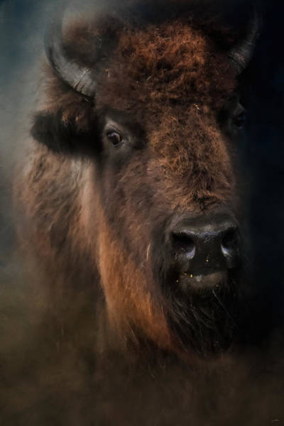 Photograph - The Mighty Bison 4 by Jai Johnson