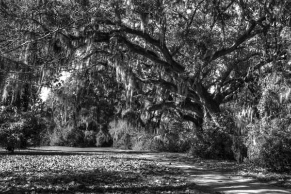 Photograph - The Mighty Oaks 1 Bw by Dimitry Papkov