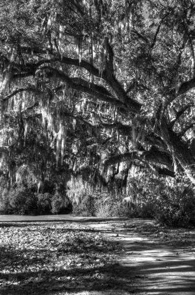 Photograph - The Mighty Oaks 2 Bw by Dimitry Papkov