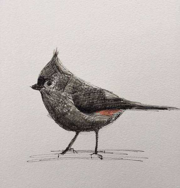 Titmouse Drawing - The Mighty Titmouse by Gail Eisenfeld