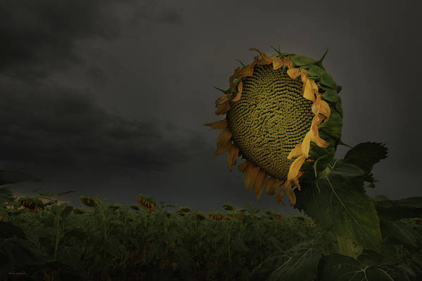 Sunflower Seeds Photograph - A Sign Of Hope Among A Crowd Of Despair by Brian Gustafson