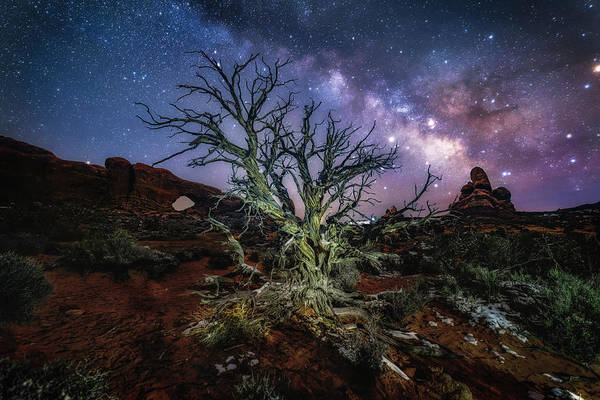 Photograph - The Milky Way Tree by Michael Ash