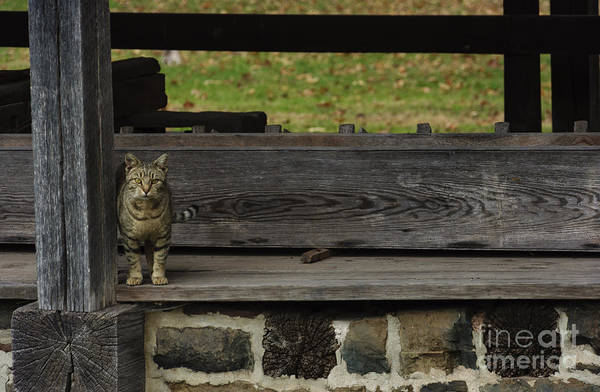 Photograph - The Mill Cat by Debra Fedchin