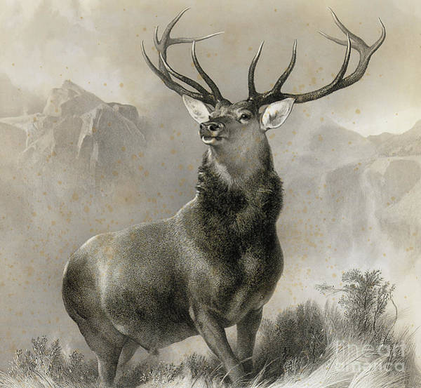 Antlers Drawing - The Monarch Of The Glen, 1852 by Edwin Landseer