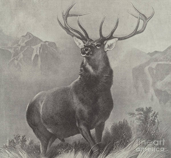 Antlers Drawing - The Monarch Of The Glen by Edwin Landseer