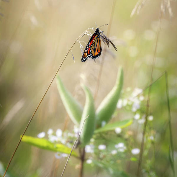Photograph - Butterfly Paradise Square by Bill Wakeley