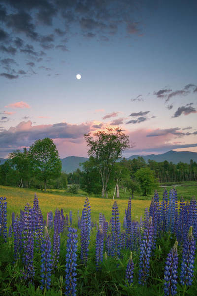 Photograph - The Moon Rises Above by Darylann Leonard Photography