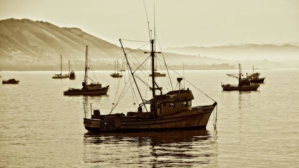 Photograph - The Moored, San Luis Harbor , California by Flying Z Photography by Zayne Diamond