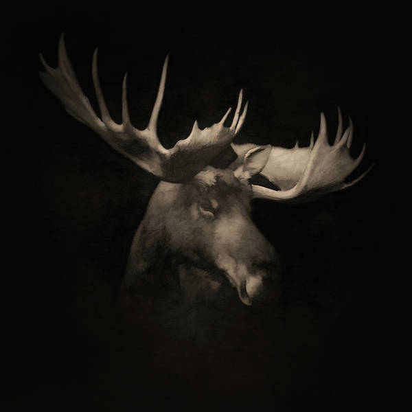 Colorado Wildlife Digital Art - The Moose 2 by Ernie Echols