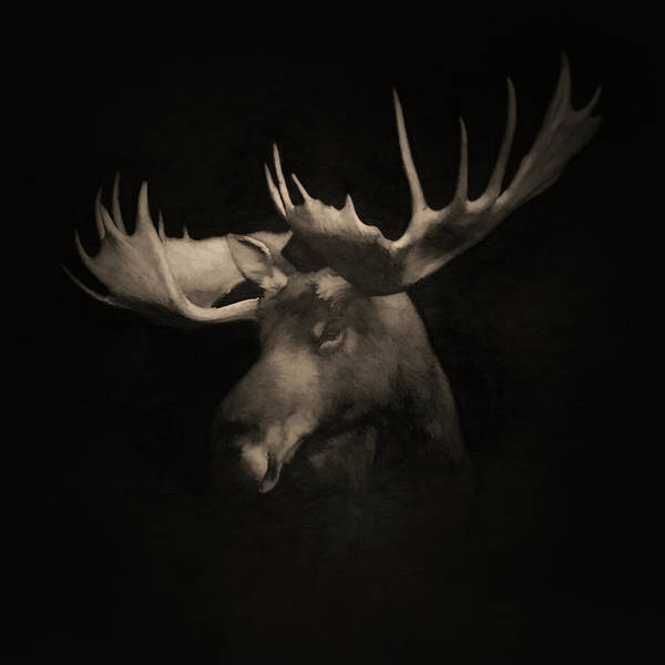 Colorado Wildlife Digital Art - The Moose 3 by Ernie Echols