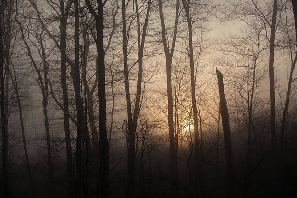 Wall Art - Photograph - The Morning Speaks by Karol Livote
