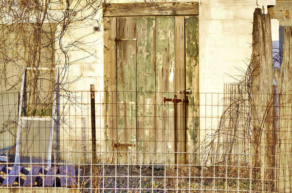 Photograph - The Mushroom Farm by Susan Maxwell Schmidt
