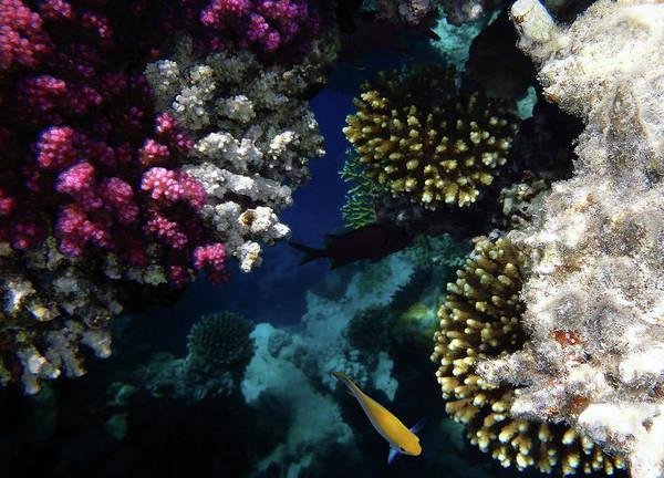 Photograph - The Mysterious Red Sea by Johanna Hurmerinta