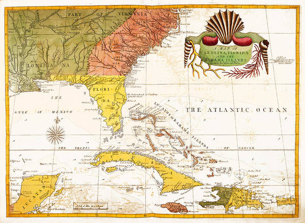 Painting - The Natural History Of Carolina, Florida, And The Bahama Islands by Celestial Images