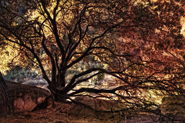 Photograph - The Nature Of Trees by Leda Robertson