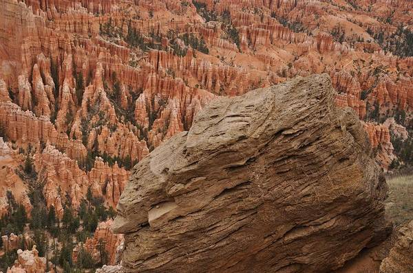 Photograph - The Near And Far Of Bryce Point by Frank Madia