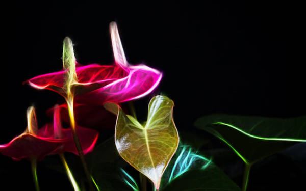 Photograph - The Neon Garden by Cameron Wood
