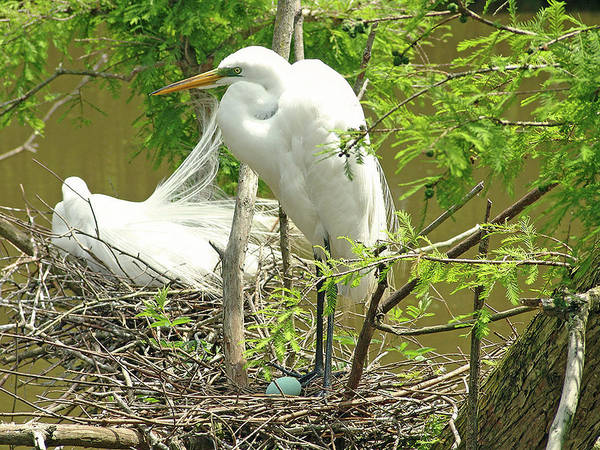 Photograph - The Nest by Ree Reid
