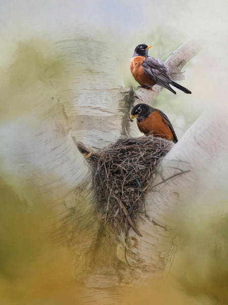 Photograph - The Nest by Robin-Lee Vieira