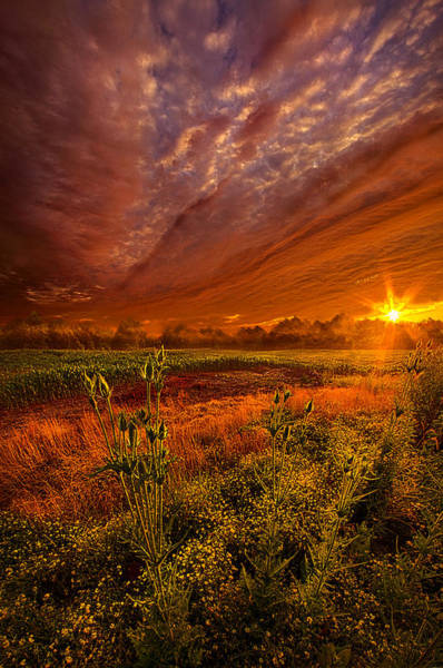 Photograph - The Never Ending Story by Phil Koch