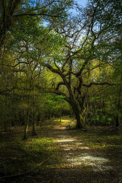 Wall Art - Photograph - The Oak Trail by Marvin Spates