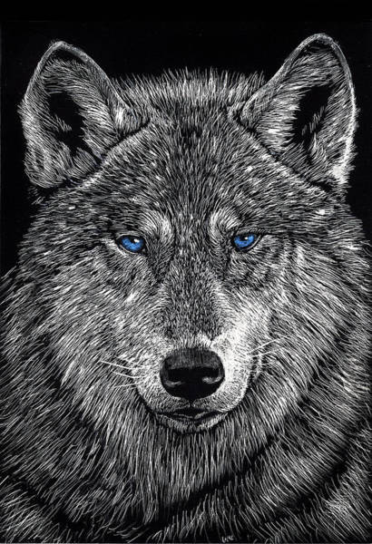 Drawing - The Obligitory Wolf by William Underwood