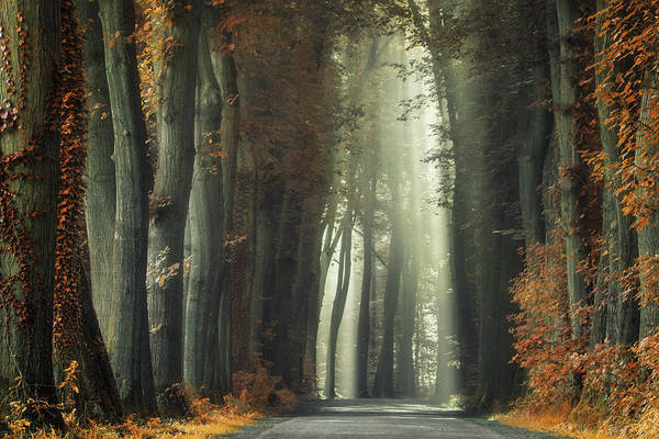 Wall Art - Photograph - The Old And Rusty Road by Martin Podt