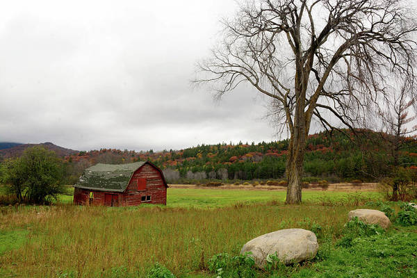 Photograph - The Old Barn With Tree by Nancy De Flon